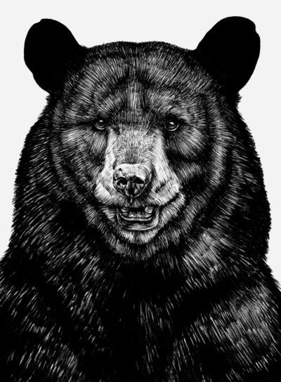 Bear sur society6