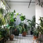 Intérieur bohème : un loft comme une jungle urbaine