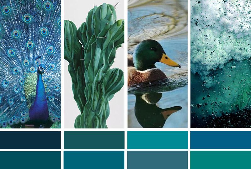 Bleu Et Vert Quel Couleur la couleur de l'année : bleu paon ou bleu canard