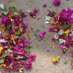 Voyage en Inde : Anegundi encore