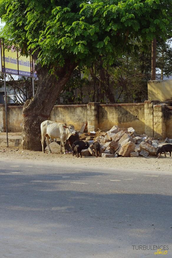 voyage-en-Inde_site-de-Hampi_3