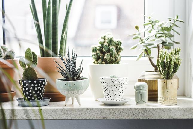 Des plantes devant la fenêtre // Happy interior
