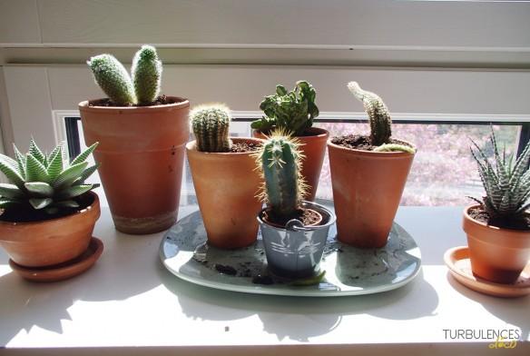 Des plantes devant la fenêtre