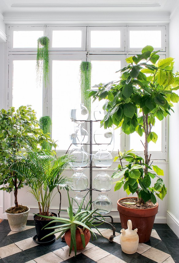 des plantes devant la fen tre. Black Bedroom Furniture Sets. Home Design Ideas