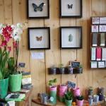 Un brin de folie : fleurs, terrariums et autres plantes