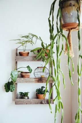 Une maison pleine de plantes à Portland