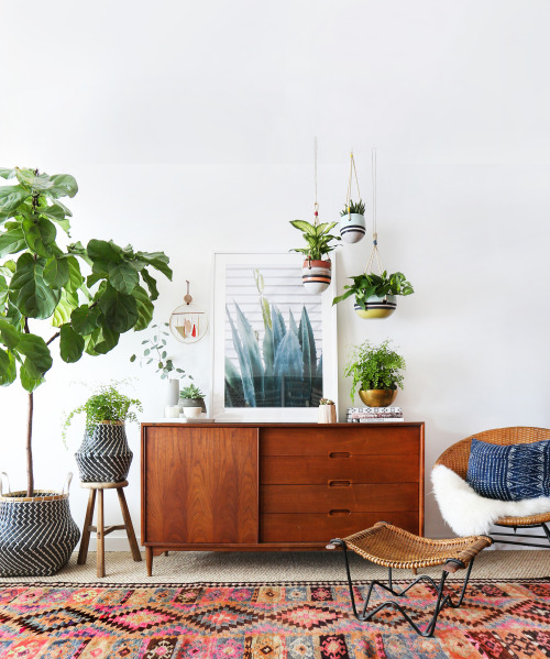 Un jardin à la maison - via Anthropologie blog Indoor garden