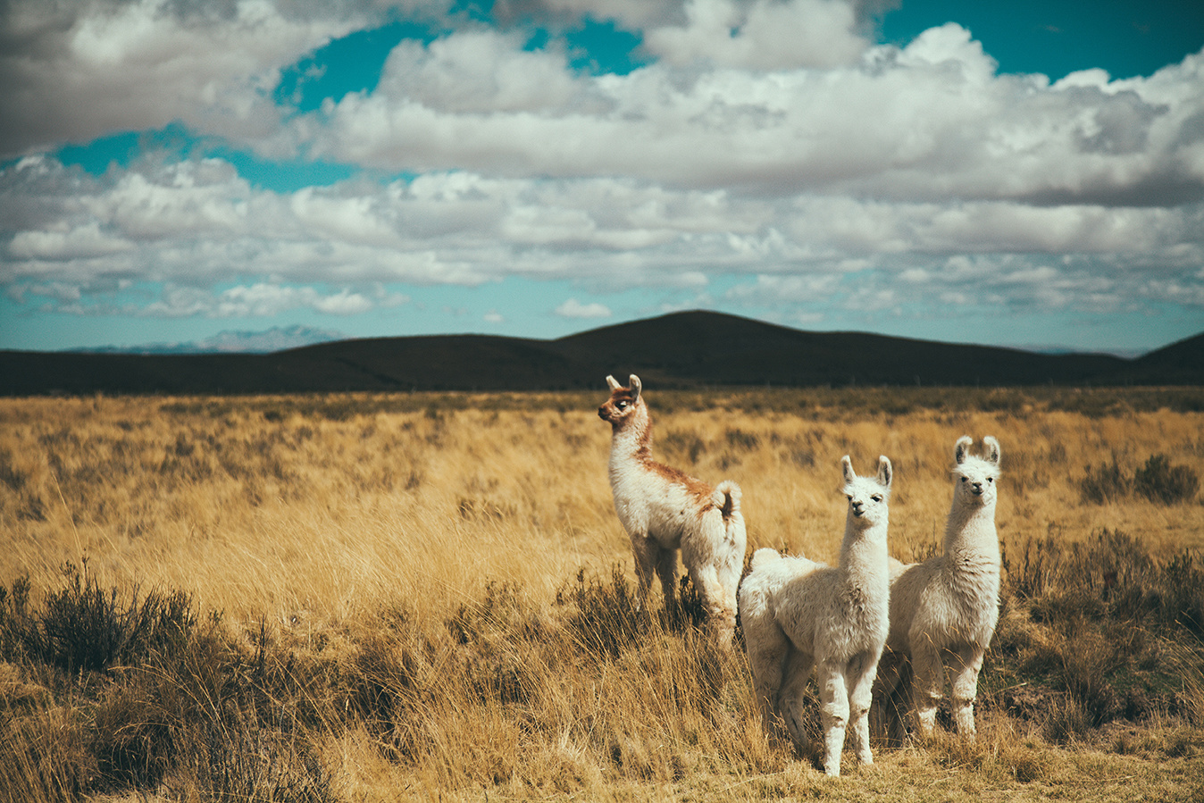 Pampa photographie