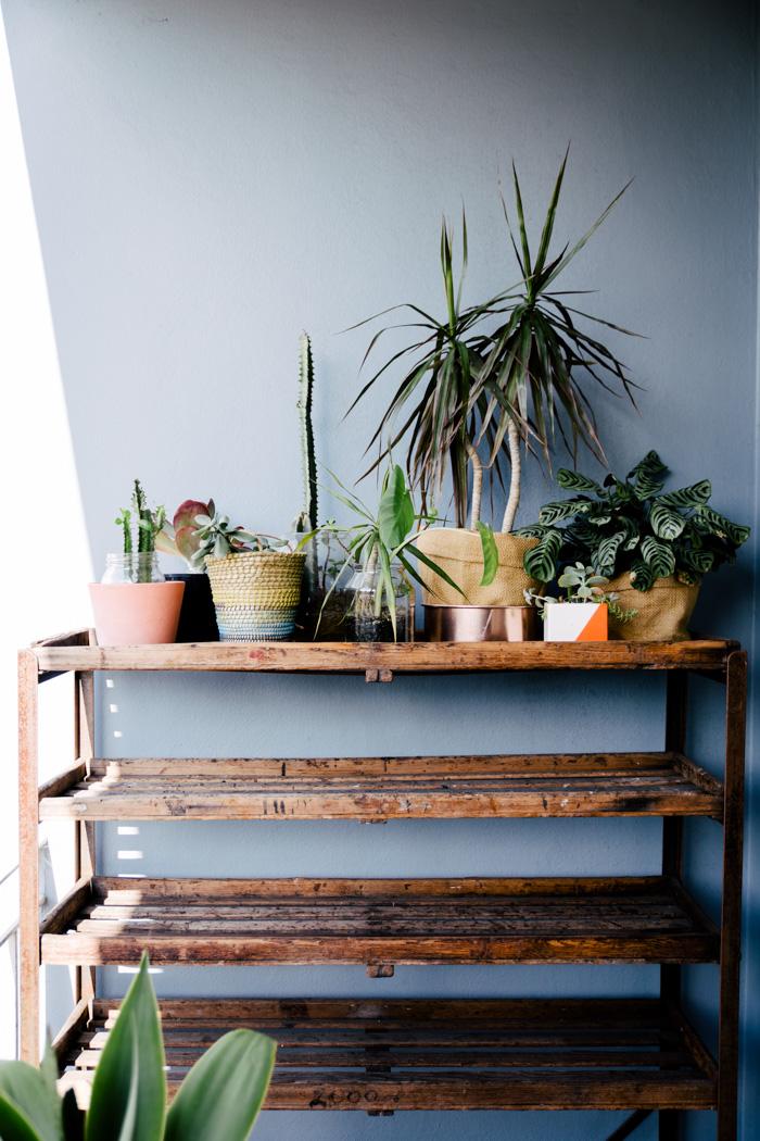 idee deco plante interieur cool plante interieur ombre pour idee deco chambre enfant meilleur. Black Bedroom Furniture Sets. Home Design Ideas