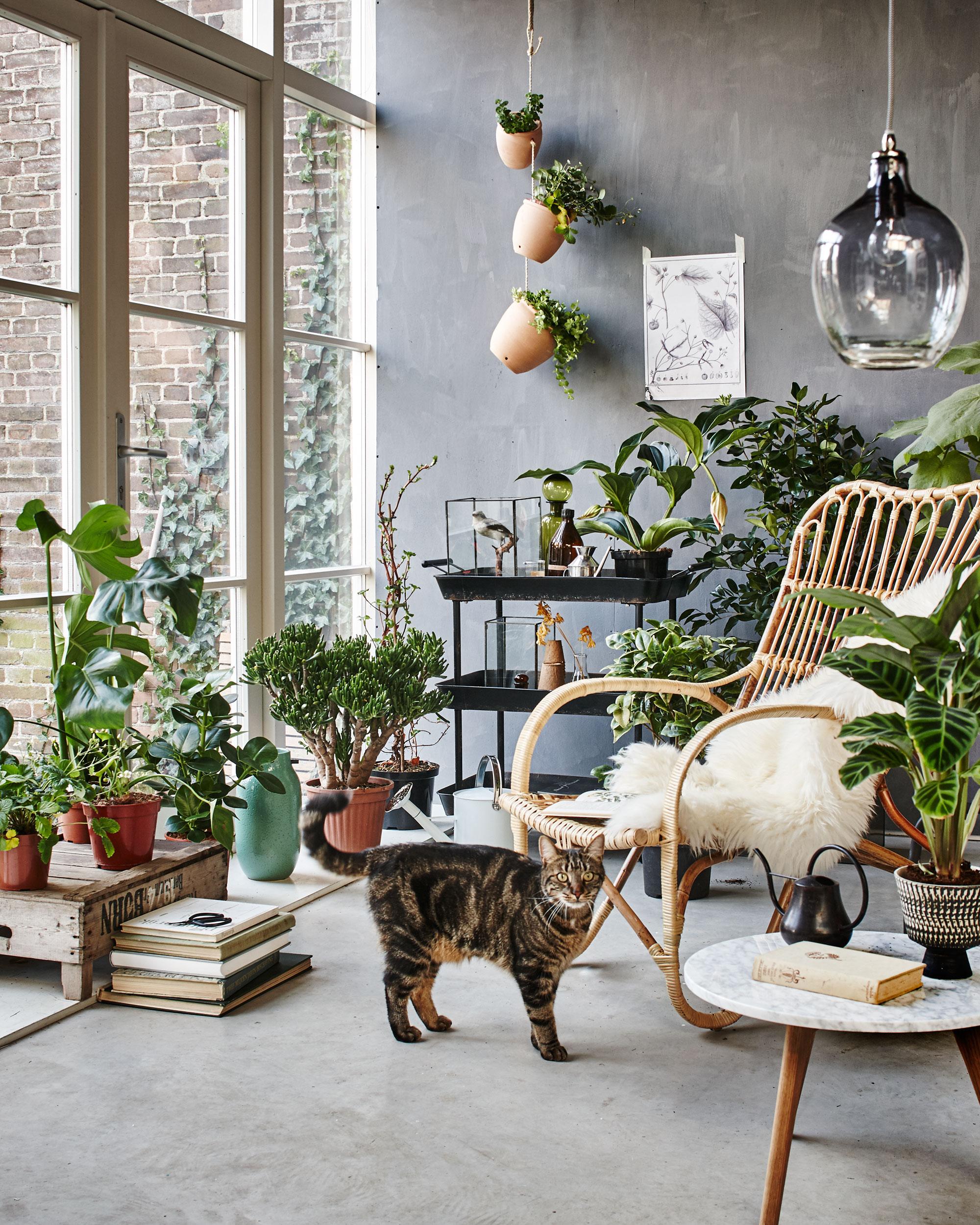 Veranda et plantes VTwonen