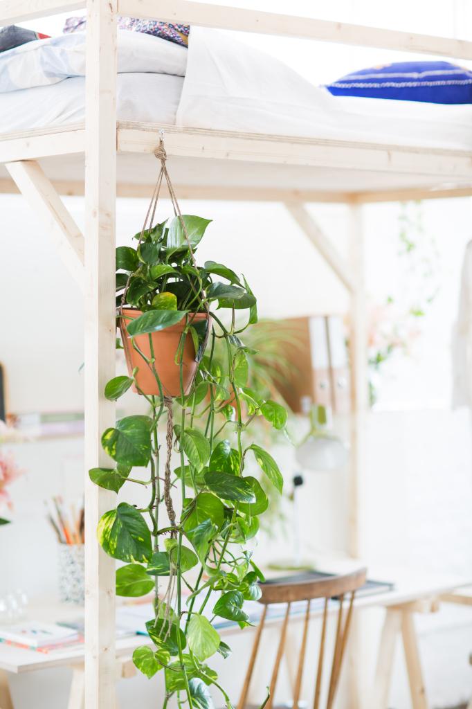Floor blog || Lit en mezzanine et plantes
