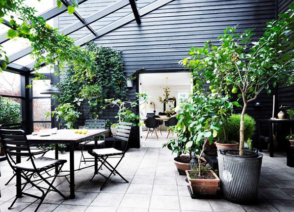 Aménager un jardin d'hiver dans sa véranda // Une véranda serre sur fond noir aménagée comme un jardin d'hiver