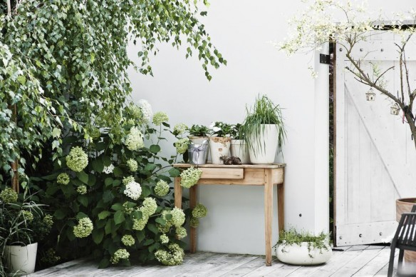 Une cour extérieur avec terrasse de bois et profusion de plantes vertes