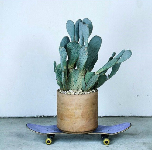 cactus sur skateboard