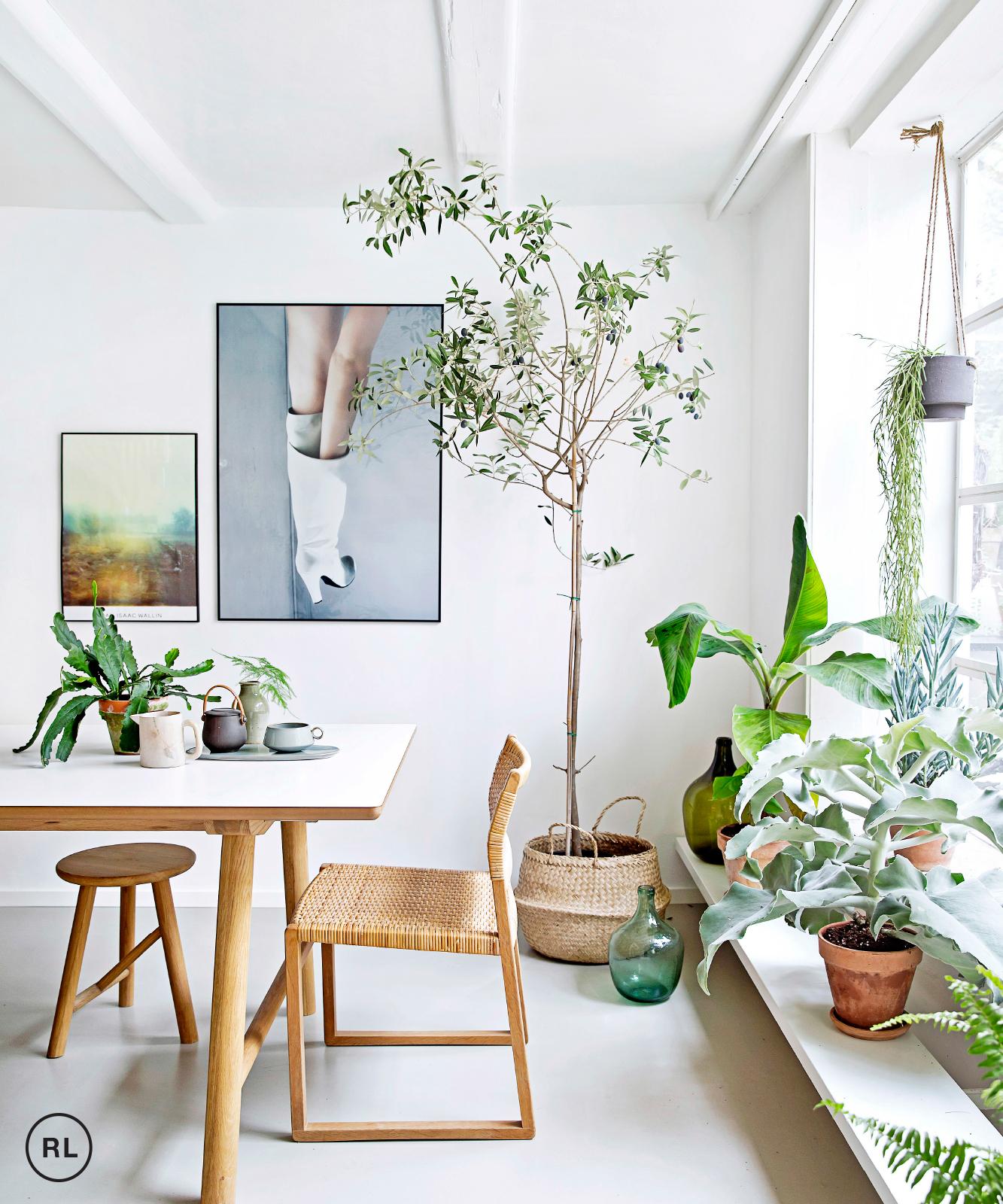 Des plantes, du blanc et des meubles en bois doré
