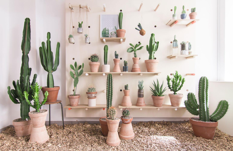 Kaktuskbh shop