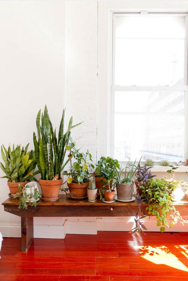 L'appartement de Caitlin Mociun à Brooklyn || #banc #plantes #vertes #urban #jungle