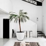 [ Inspiration du déco ] Des plantes, du design, du vert…