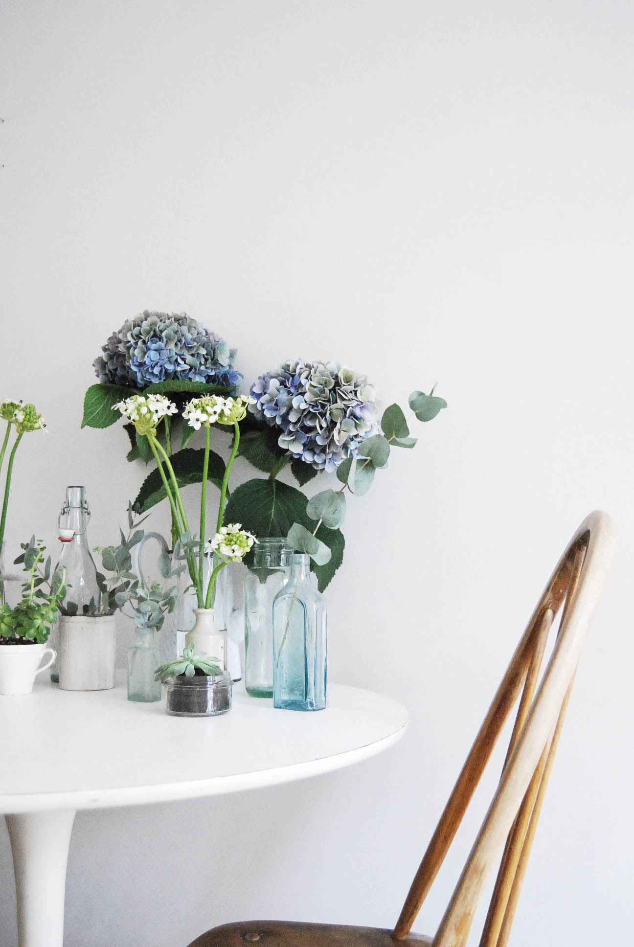 Catesthill blog - Urban Jungle bloggers plants & flowers