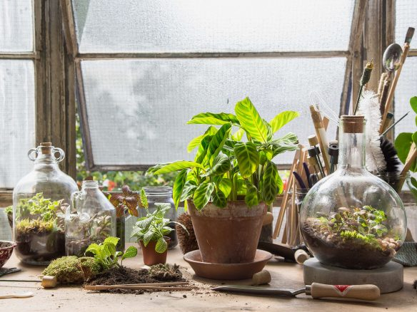 London Terrariums