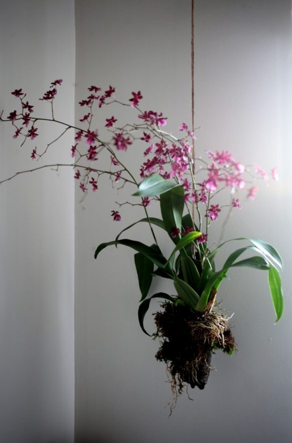 03 on oncidium orchid care