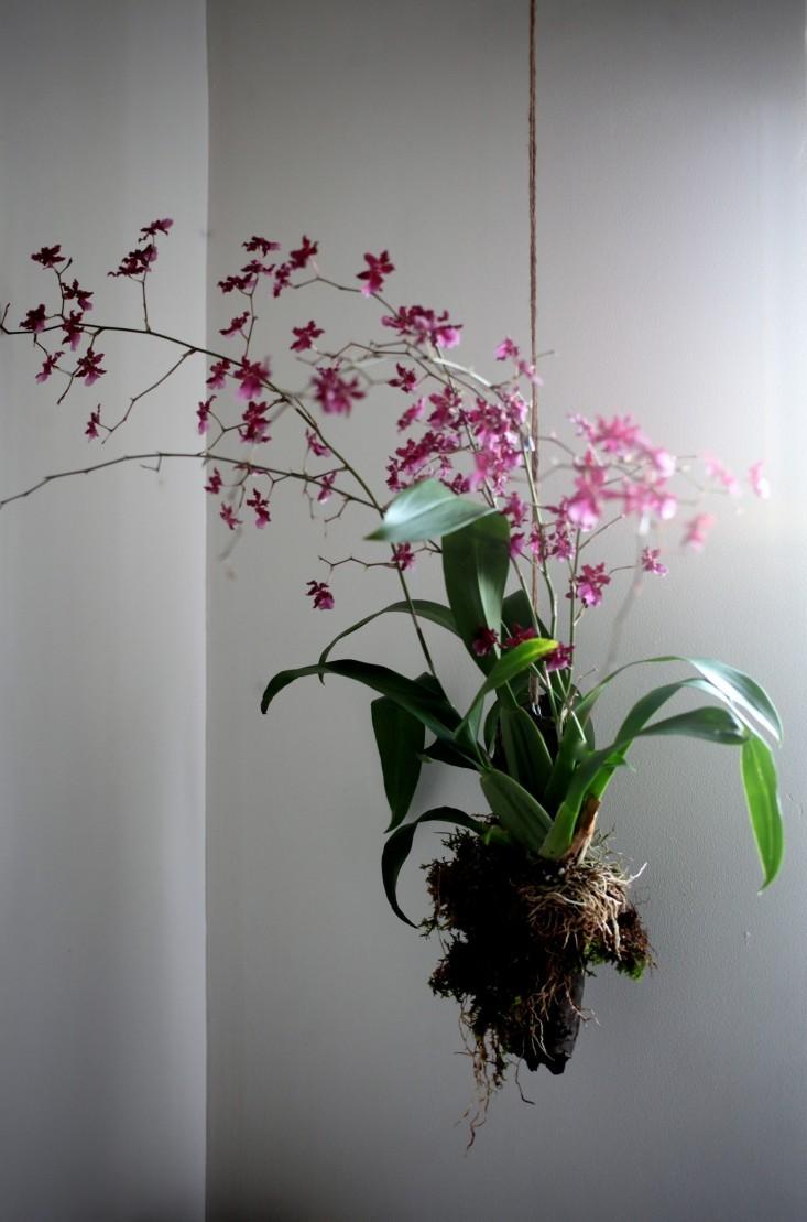 plantes et design 5 id es exp rimenter chez soi
