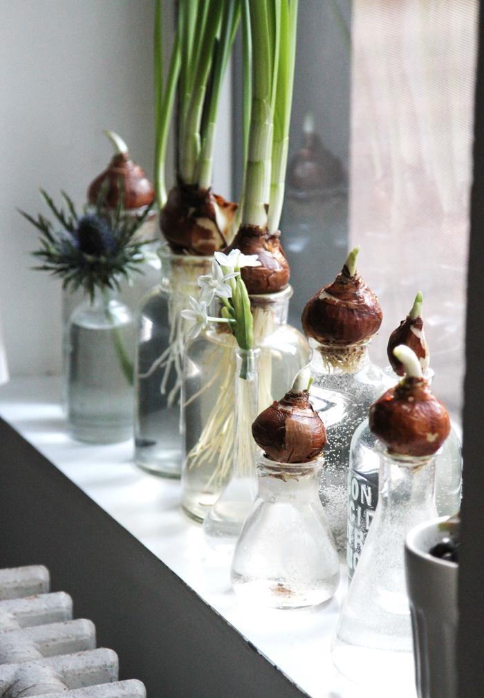 DIY Bouteilles et oignons de printemps