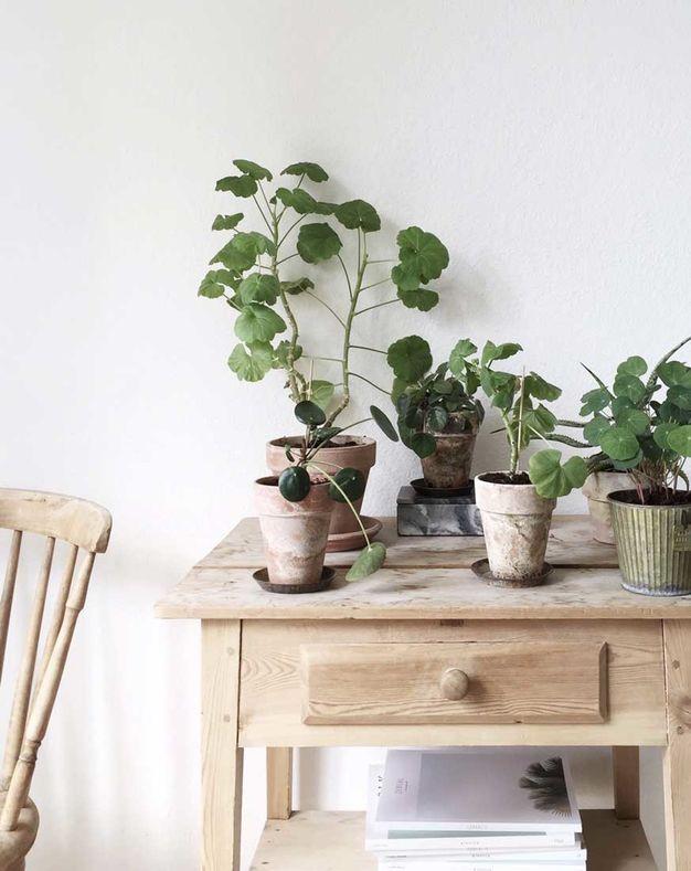Meuble en bois brut, ambiance nature || Meubles en bois brut et pots de fleur