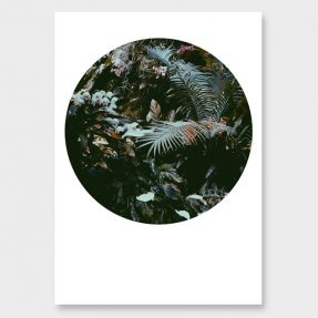 Affiches botaniques design - Photographies d'Amy Wybrow, Flora conspicua no2 hero