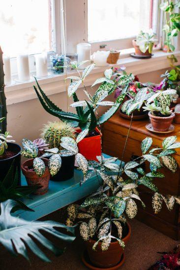 Déco blanche et plantes vertes - L'intérieur de Nicole Valentine Don stylée par Luisa Brimble