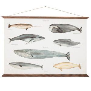 arminho_affiche-baleines