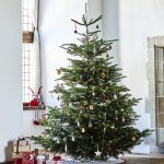 Le sapin de Noël est-il écolo ? Quelle alternative ?