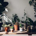 Aller savoir pourquoi on aime autant les plantes d'intérieur