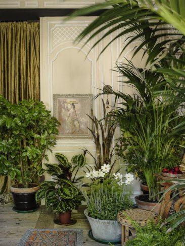 Projet d'aménagement d'une chambre d'hôtes : envie d'une ambiance jardin d'hiver