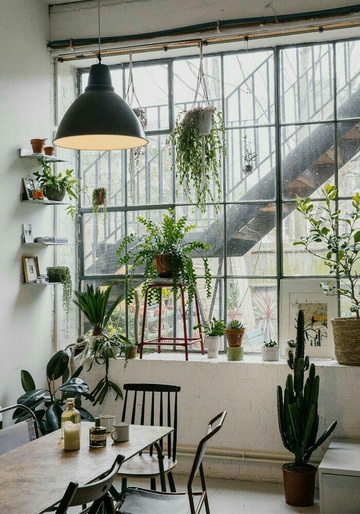 Livre - House of plants en anglais, de Bart Kiggen etMagali Elali