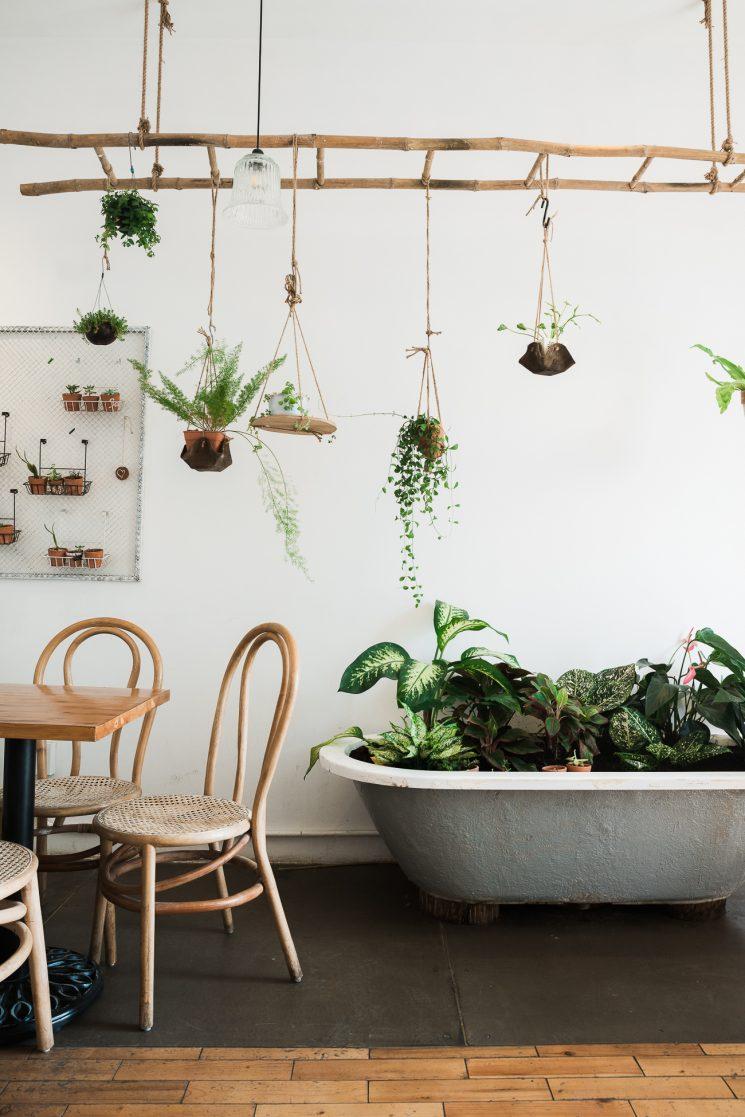 Inspiration d co l invasion des plantes vertes for Plantes vertes pas cher