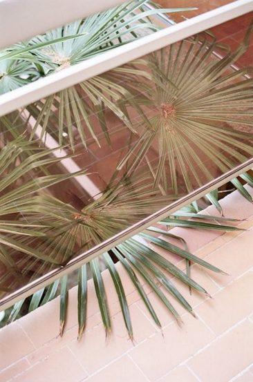Palmes et murs rose sumon