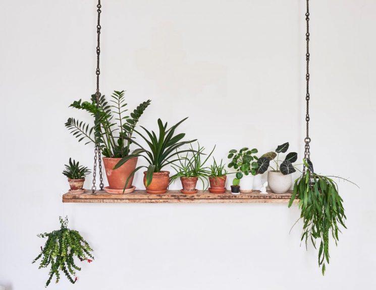 Intérieurs hygge peuplés de plantes - Une maison bohème à Londres