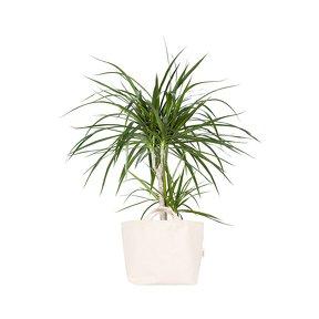 http://www.turbulences-deco.fr/wp-content/uploads/2017/10/thecoolrepublic_comte-dracaena-et-son-cache-pot-ivoire-plantes-moi.jpg