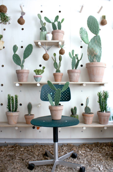 Tendance cactus mania