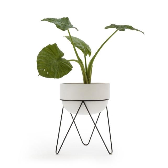 Cache pot, Plantae sur Ampm