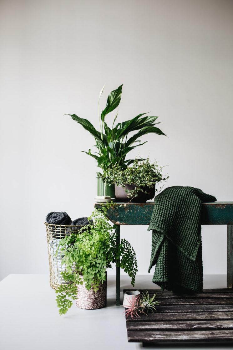 La couleur verte en déco // Des plantes, des plantes, des plantes vertes