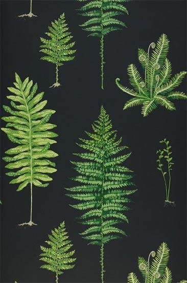 Papier-peint botanique - Modèle de papier-peint