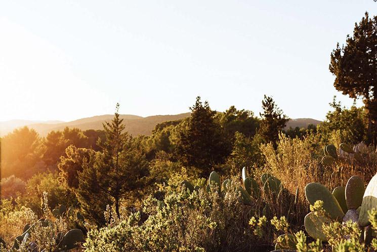 The Campo Loft à Ibiza, un loft au milieu de la nature sauvage de l'île