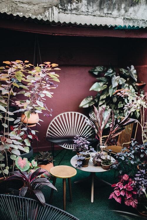 herzundblut.com - Extrait du livre Plant Tribe: Living Happily Ever After With Plants d'Igor Josifovic et Judith De Graaff