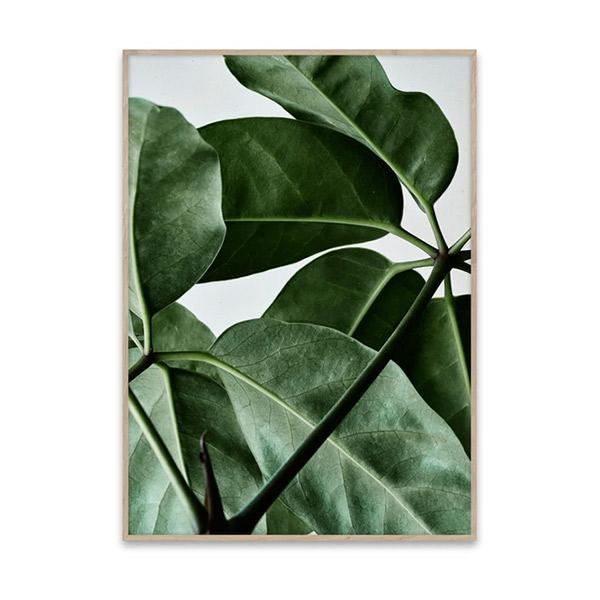 Poster Green Home, design : Riikka Kantinkoski pour Paper Collective