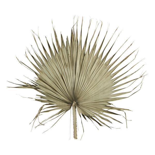 Feuille de palmier séchée - Madam Stoltz