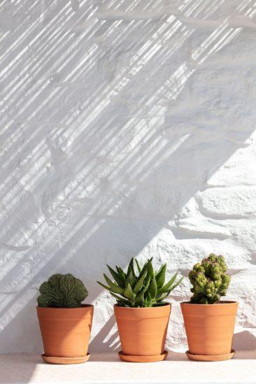 [ Décors des îles grecques ] Hôtel Papyrella à Mykonos // Cactus